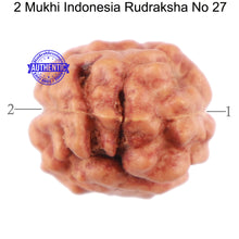Load image into Gallery viewer, 2 Mukhi Rudraksha from Indonesia - Bead No. 27
