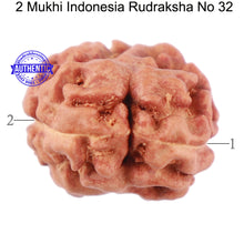 Load image into Gallery viewer, 2 Mukhi Rudraksha from Indonesia - Bead No. 32