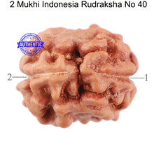 Load image into Gallery viewer, 2 Mukhi Rudraksha from Indonesia - Bead No 40