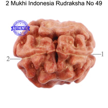 Load image into Gallery viewer, 2 Mukhi Rudraksha from Indonesia - Bead No. 49