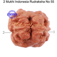 Load image into Gallery viewer, 2 Mukhi Rudraksha from Indonesia - Bead No. 55
