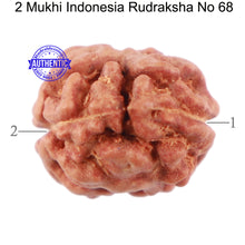 Load image into Gallery viewer, 2 Mukhi Rudraksha from Indonesia - Bead No 68