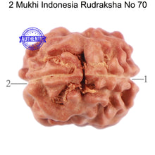 Load image into Gallery viewer, 2 Mukhi Rudraksha from Indonesia - Bead No. 70