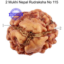 Load image into Gallery viewer, 2 Mukhi Rudraksha from Nepal - Bead No. 115
