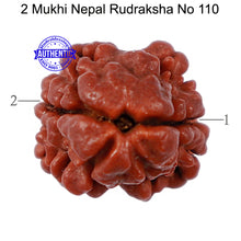 Load image into Gallery viewer, 2 Mukhi Rudraksha from Nepal - Bead No. 110
