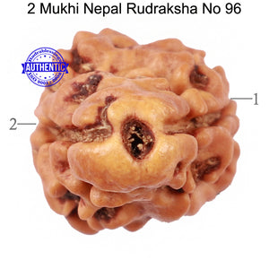 2 Mukhi Rudraksha from Nepal - Bead No. 96