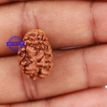 Load image into Gallery viewer, 2 Mukhi Rudraksha from Nepal - Bead No. 97