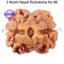 Load image into Gallery viewer, 2 Mukhi Rudraksha from Nepal - Bead No. 99