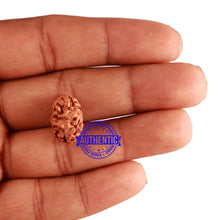 Load image into Gallery viewer, 2 Mukhi Rudraksha from Indonesia - Bead No. 127