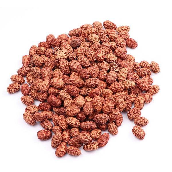 2 Mukhi Rudraksha from Indonesia  (Standard Size) - 100 beads pack