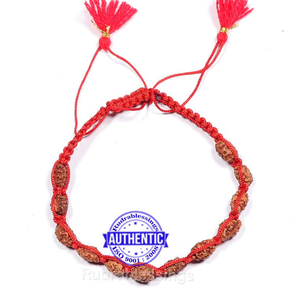 Smooth 2 Mukhi Rudraksha Wrist Band - (12 beads)