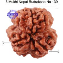 Load image into Gallery viewer, 3 Mukhi Rudraksha from Nepal - Bead No. 139