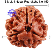 Load image into Gallery viewer, 3 Mukhi Rudraksha from Nepal - Bead No. 150 (Giant Size)