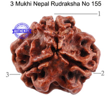 Load image into Gallery viewer, 3 Mukhi Rudraksha from Nepal - Bead No. 155