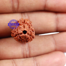 Load image into Gallery viewer, 3 Mukhi Rudraksha from Nepal - Bead No. 160