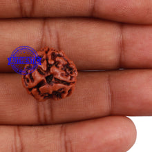 Load image into Gallery viewer, 3 Mukhi Rudraksha from Nepal - Bead No. 171