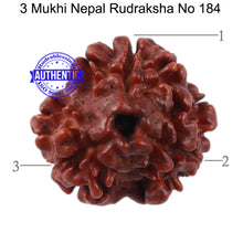 Load image into Gallery viewer, 3 Mukhi Rudraksha from Nepal - Bead No. 184