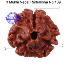 Load image into Gallery viewer, 3 Mukhi Rudraksha from Nepal - Bead No. 189