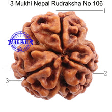 Load image into Gallery viewer, 3 Mukhi Rudraksha from Nepal - Bead No. 106 (Giant Size)