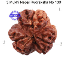 Load image into Gallery viewer, 3 Mukhi Rudraksha from Nepal - Bead No. 130