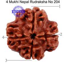 Load image into Gallery viewer, 4 Mukhi Rudraksha from Nepal - Bead No. 204