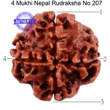Load image into Gallery viewer, 4 Mukhi Rudraksha from Nepal - Bead No. 207