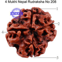 Load image into Gallery viewer, 4 Mukhi Rudraksha from Nepal - Bead No. 208
