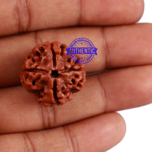 Load image into Gallery viewer, 4 Mukhi Rudraksha from Nepal - Bead No. 20