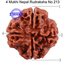 Load image into Gallery viewer, 4 Mukhi Rudraksha from Nepal - Bead No. 213