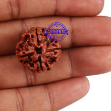 Load image into Gallery viewer, 4 Mukhi Rudraksha from Nepal - Bead No. 216