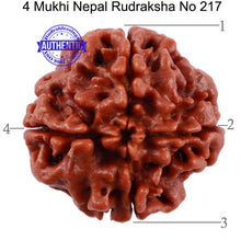 Load image into Gallery viewer, 4 Mukhi Rudraksha from Nepal - Bead No. 217