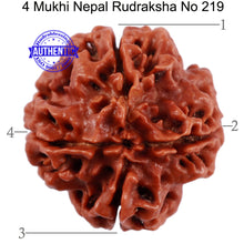 Load image into Gallery viewer, 4 Mukhi Rudraksha from Nepal - Bead No. 219