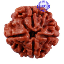 Load image into Gallery viewer, 4 Mukhi Rudraksha from Nepal - Bead No. 21