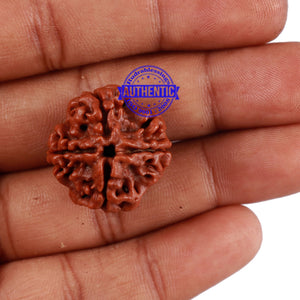 4 Mukhi Rudraksha from Nepal - Bead No. 221
