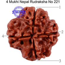 Load image into Gallery viewer, 4 Mukhi Rudraksha from Nepal - Bead No. 221