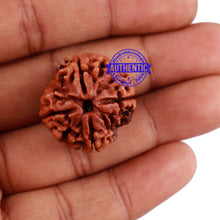 Load image into Gallery viewer, 4 Mukhi Rudraksha from Nepal - Bead No. 226