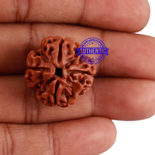 Load image into Gallery viewer, 4 Mukhi Rudraksha from Nepal - Bead No. 228