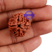Load image into Gallery viewer, 4 Mukhi Rudraksha from Nepal - Bead No. 229