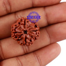 Load image into Gallery viewer, 4 Mukhi Rudraksha from Nepal - Bead No. 22