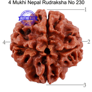 4 Mukhi Rudraksha from Nepal - Bead No. 230