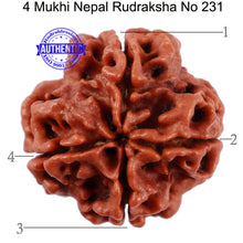 Load image into Gallery viewer, 4 Mukhi Rudraksha from Nepal - Bead No. 231