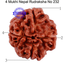 Load image into Gallery viewer, 4 Mukhi Rudraksha from Nepal - Bead No. 232