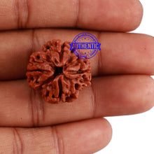 Load image into Gallery viewer, 4 Mukhi Rudraksha from Nepal - Bead No. 4