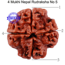 Load image into Gallery viewer, 4 Mukhi Rudraksha from Nepal - Bead No. 5