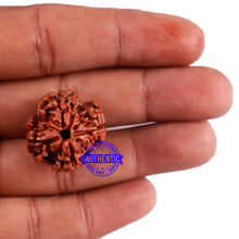 Load image into Gallery viewer, 4 Mukhi Rudraksha from Nepal - Bead No. 24