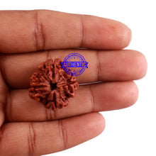 Load image into Gallery viewer, 4 Mukhi Rudraksha from Nepal - Bead No. 28