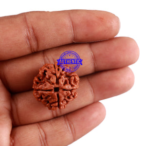 4 Mukhi Rudraksha from Nepal - Bead No. 29