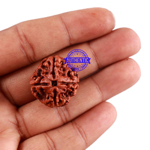 4 Mukhi Rudraksha from Nepal - Bead No. 34