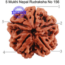 Load image into Gallery viewer, 5 Mukhi Rudraksha from Nepal - Bead No. 156