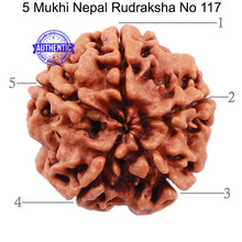 Load image into Gallery viewer, 5 Mukhi Rudraksha from Nepal - Bead No. 117